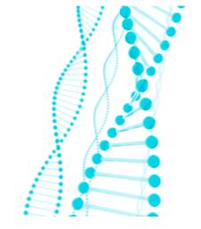 遺伝子分析結果 金城レポート